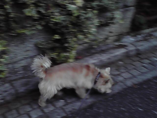 10月14日買い物犬