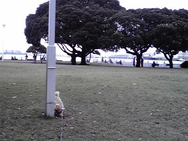 10月15日イベント犬