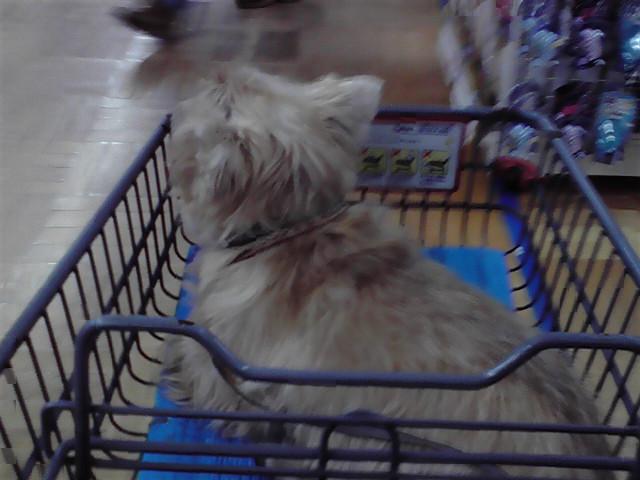 10月20日買い物犬