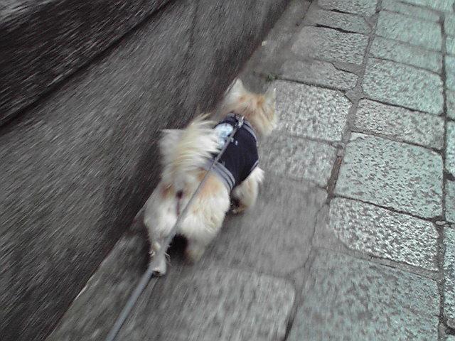 10月21日曇天犬