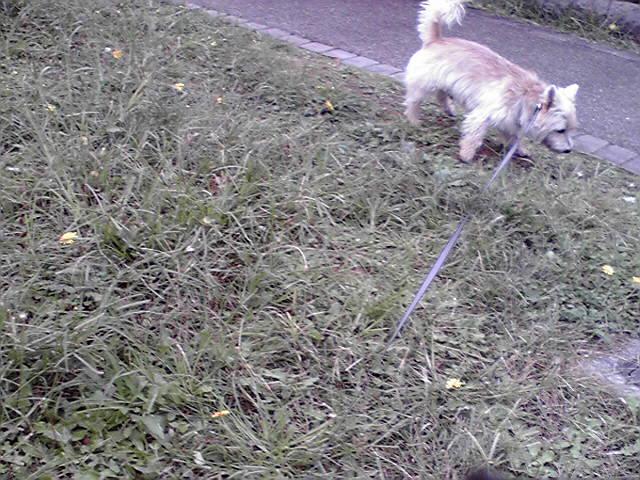 10月22日雨上がりの犬