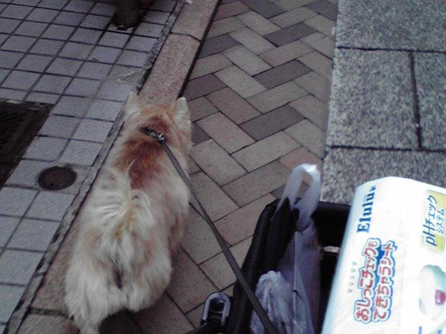 10月24日買い物犬