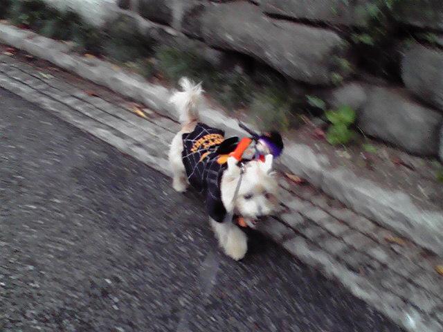 10月31日ハローイン犬