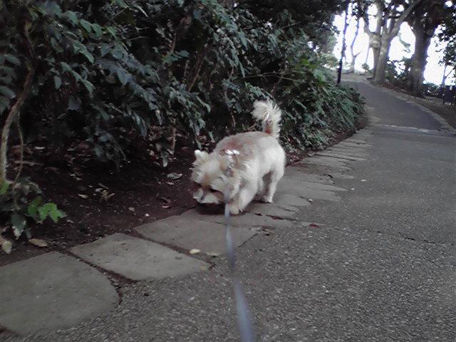 11月5日流浪の犬