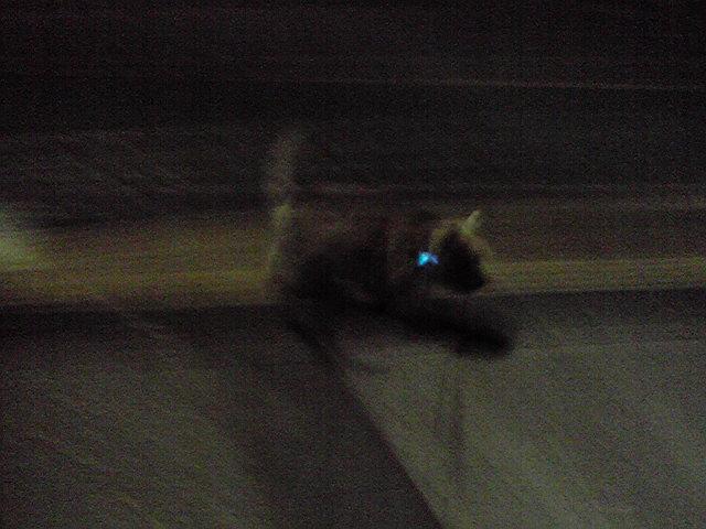 11月9日夜犬