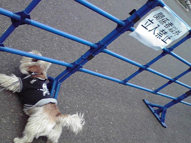 11月18日延期犬