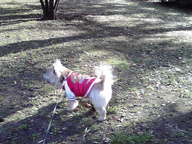 11月30日蘇る犬