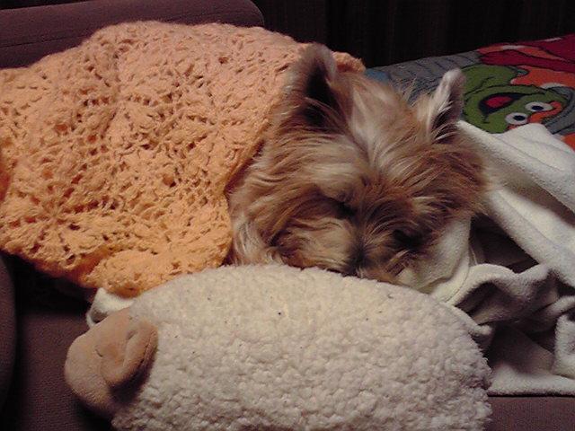 12月5日寝てる犬