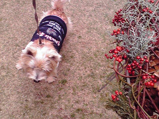 12月6日クリスマス犬