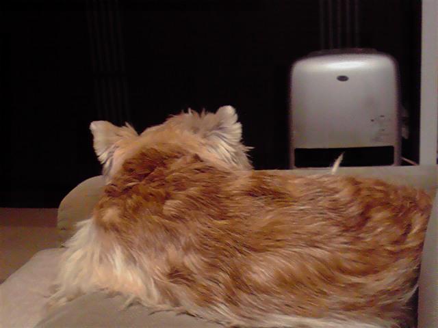 12月8日寒い犬