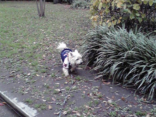 12月9日さ迷う犬