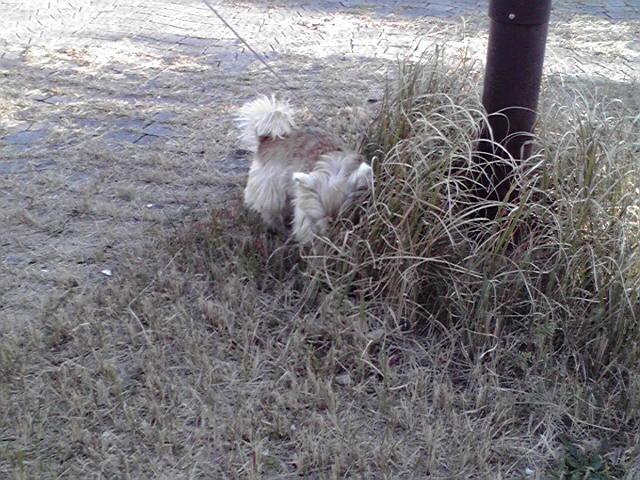 12月11日海の犬