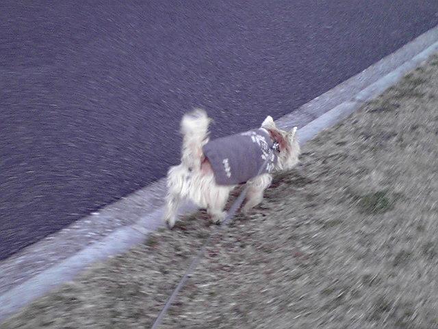 12月11日お腹ぎゅるぎゅる犬