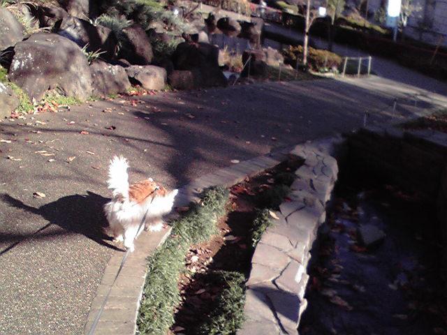 12月13日よい天気犬