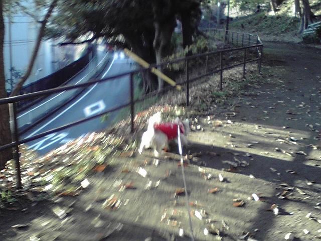12月15日山手公園犬