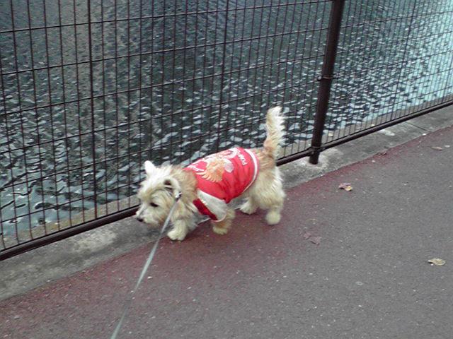 12月16日買い物犬