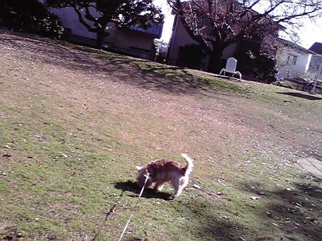 12月20日山手公園犬