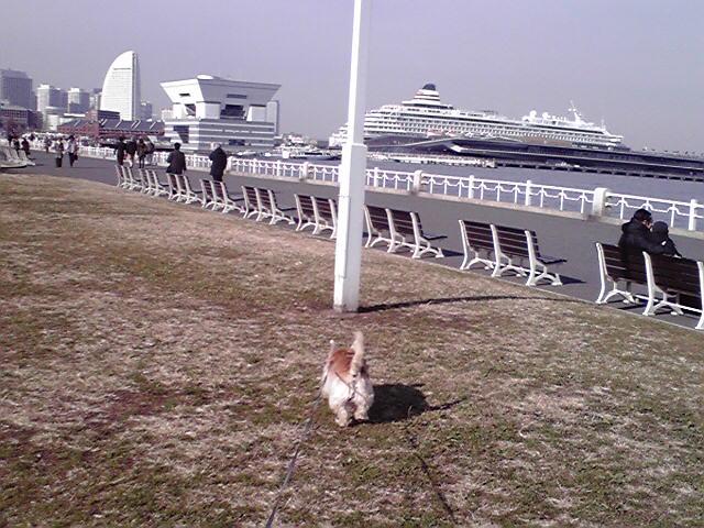 12月21日山下公園犬