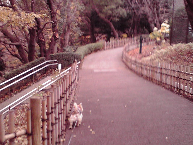 12月22日セーター犬