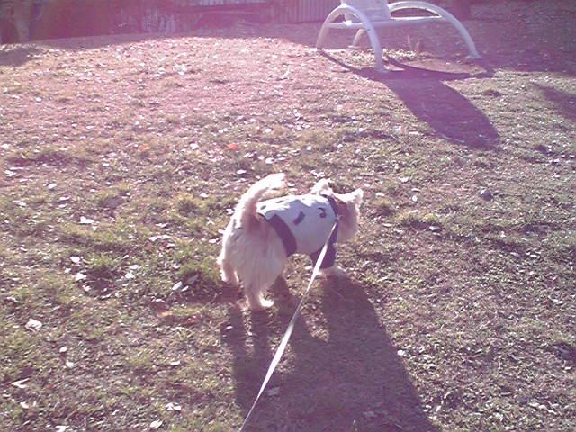 12月24日メリクリ犬