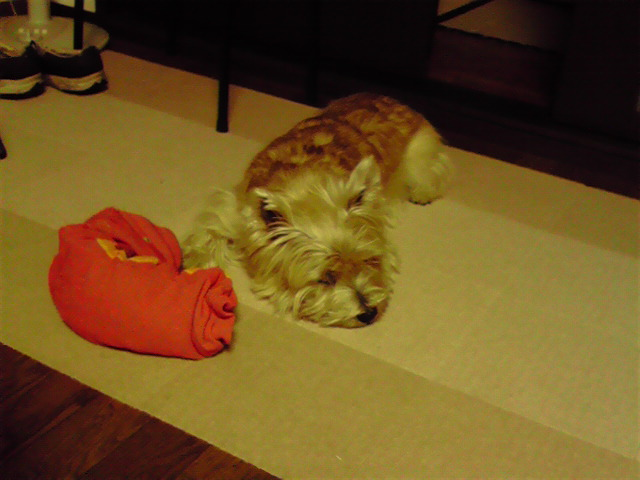 12月25日報道の犬