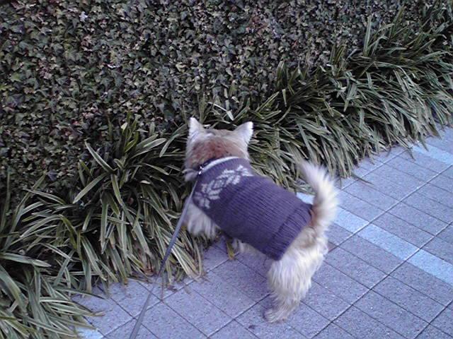 12月27日デパート犬