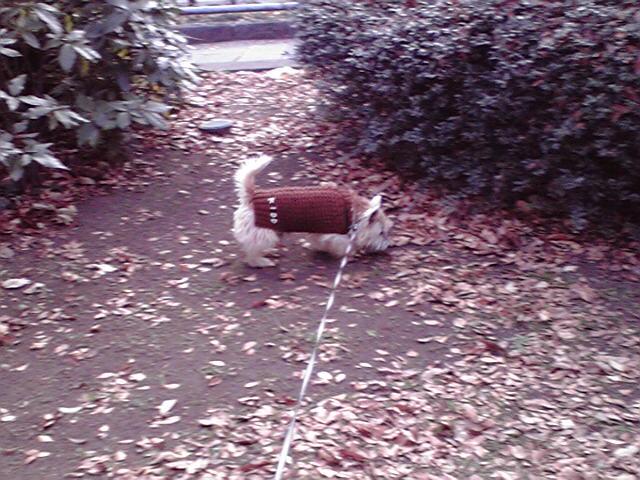 12月29日あと2日犬