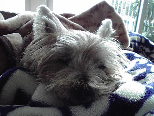 1月1日明けました犬