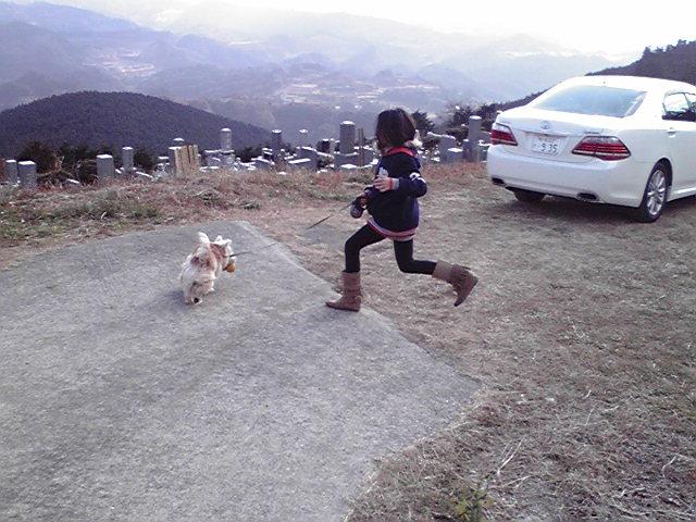 1月2日ギャルと遊ぶ犬