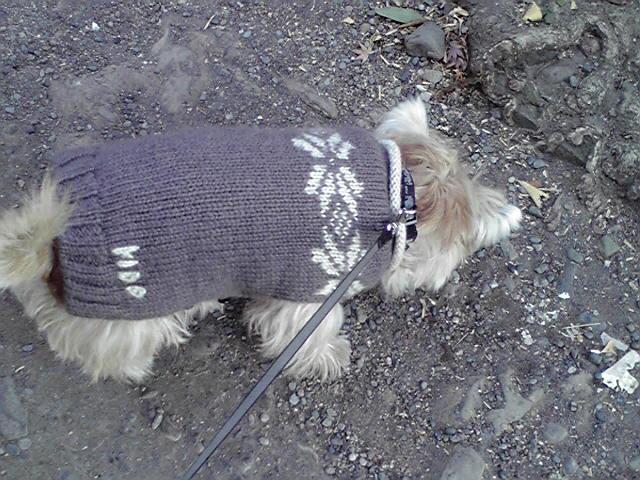 1月8日初詣犬