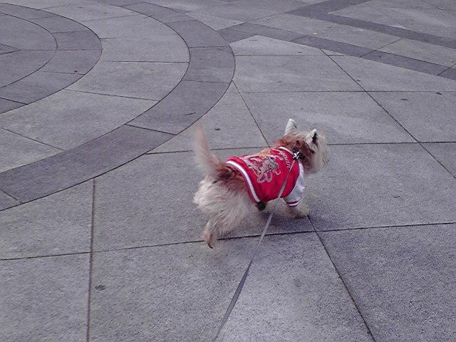 1月15日復活犬