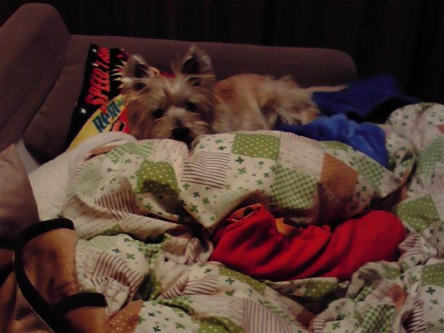 1月14日続足が痛い犬