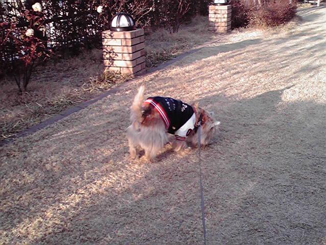 1月17日お腹痛い犬