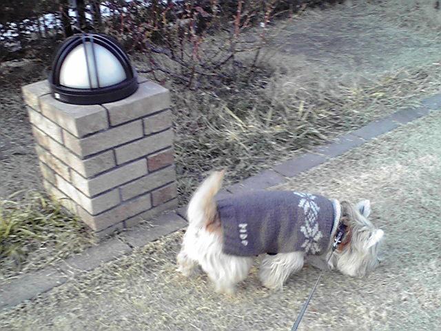 1月18日エスカル犬