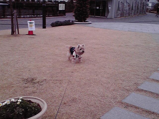 1月23日寒い犬