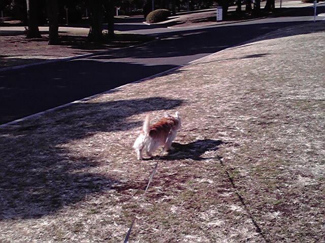 1月26日さよなら犬