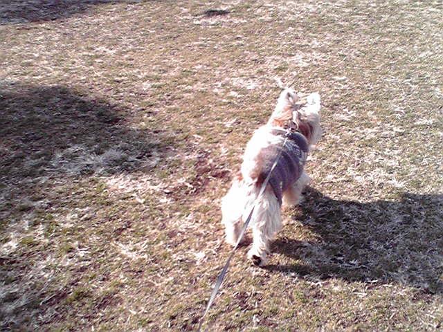 1月27日海の犬