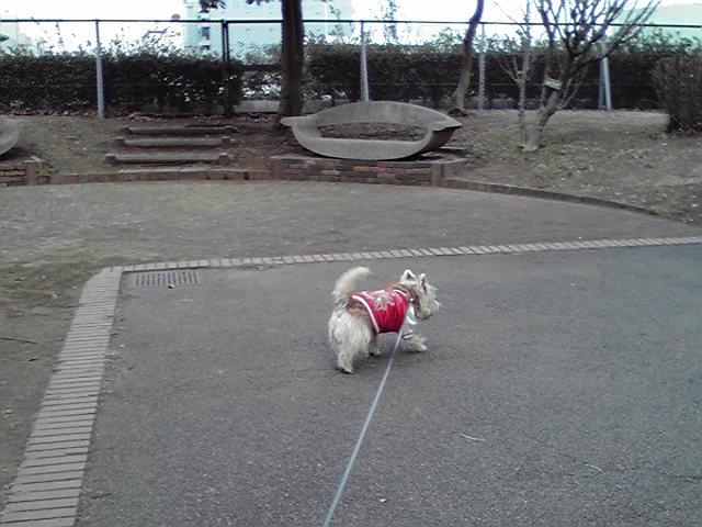 2月5日雨の前の犬