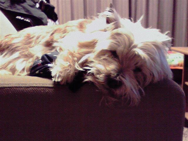 2月16日寒い犬