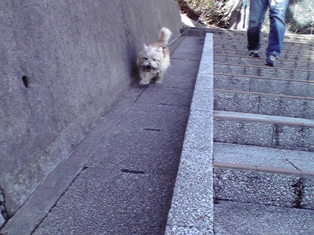 2月18日走る犬