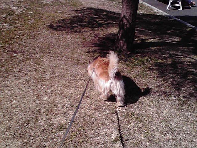 2月19日めいちゃん犬