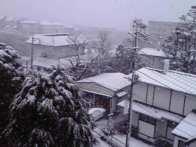 2月29日雪犬