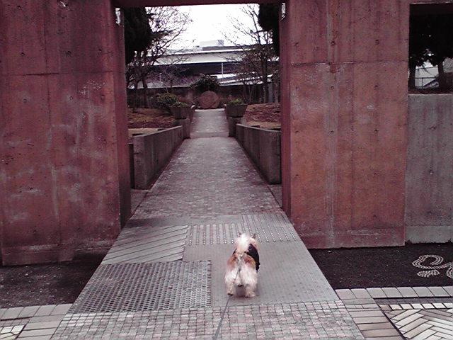 3月1日弥生犬