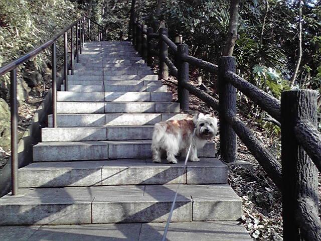3月3日雛壇犬