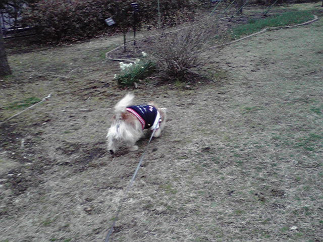 3月4日曇天犬
