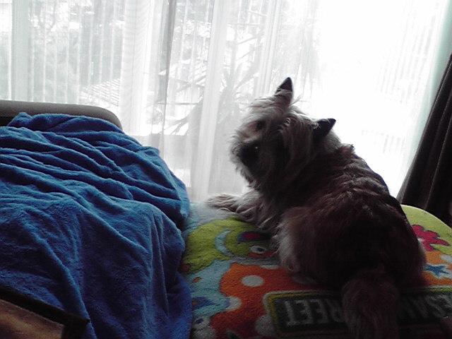 3月5日雨犬