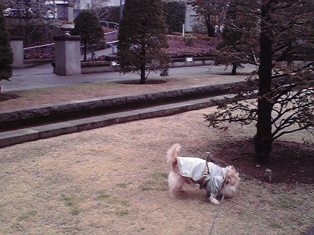 3月10日ギリギリ犬