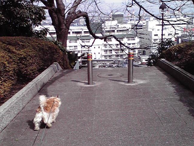 3月11日追悼犬