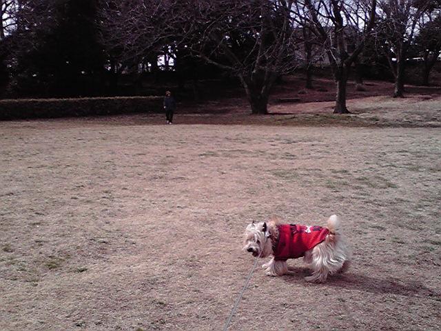 3月12日観梅犬