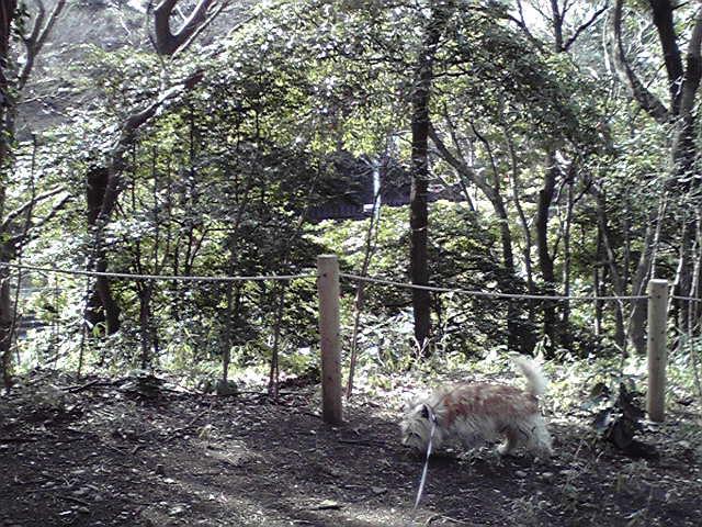 3月13日春犬
